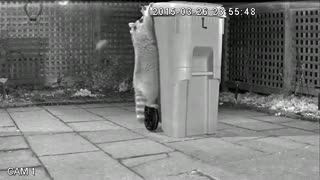 Toronto unveils 'raccoon-proof' green bin  - Video