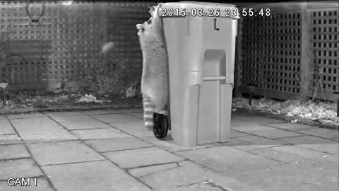 Toronto unveils 'raccoon-proof' green bin