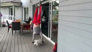Dog Follows Owner Doing Handstands