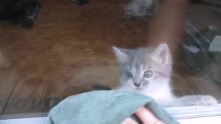 Adorable kitten freaks out over window cleaning - Video