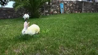 Bunny Rabbits Eating Together