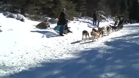 Minnesota sled-dog race underway