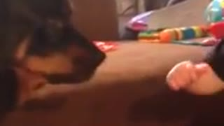 Toddler attempts to grab dog's tongue during kisses