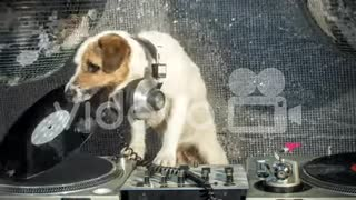Dog DJ dogs