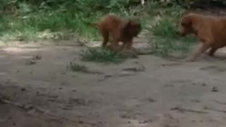 Not Your Typical Chew Toy - Video