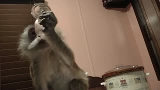 Monkey enjoys wine glass of Mona-vie premier acai blend HER way  - Video