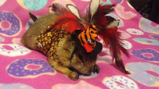 Prairie dog celebrates Thanksgiving with adorable outfit