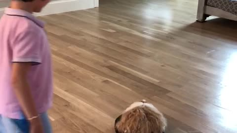 Cutest Guinea Pig Goes On Roomba Ride!