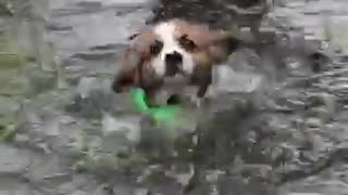 Puppy's first ever swim will totally melt your heart
