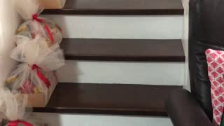 Big Sister Helps Puppy Through Staircase Struggle