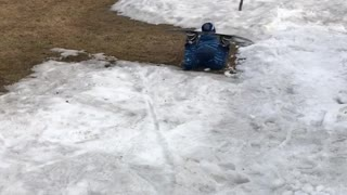 Little boy snowboards down small slope and falls on knees