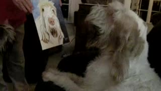 Dog's priceless reaction to seeing a portrait of himself - Video