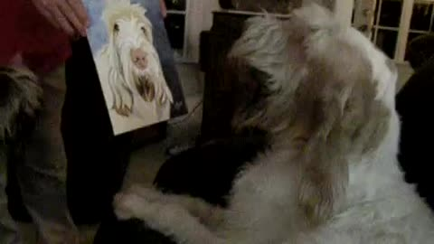 Dog's priceless reaction to seeing a portrait of himself