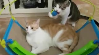 Look How This Cat Dont Want to Share Her Toy with Another Cat