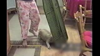 Dog Hates Ironing Board And Attacks It