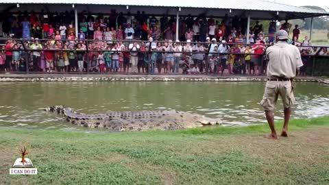 The man play game with big crocodile and show in public