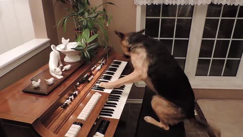 Compilation Of Clever Dogs Flaunting Their Many Talents