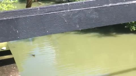 Man jumps from bottom of bridge into murky lake water