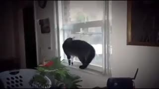 Cat Fanny Video Compilation - Video