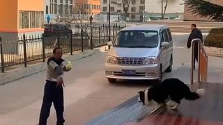 Dog play volley ball on the road