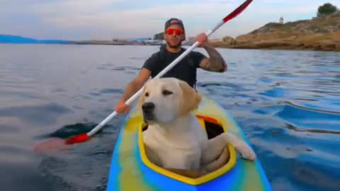 Adventurous dog destined to be a sailing pro