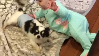 Playful chihuahua adorably entertains baby - Video