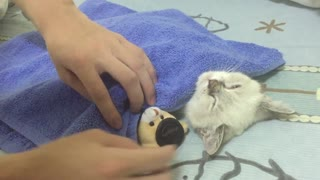 The cutest kitten ever! || Viral Video UK