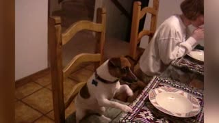 Family And Dog Join Together For Mealtime Prayer  - Video