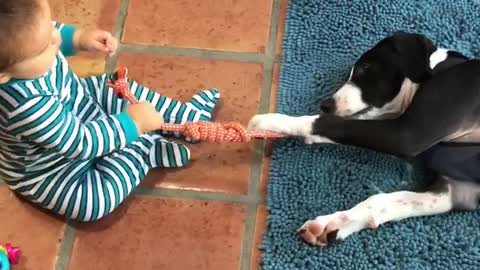Baby and puppy play game of tug-of-war