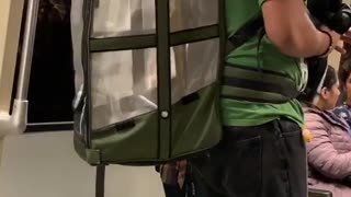 Man subway parrot in cage backpack green shirt