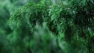 Calming Piano Music with Rain Thunder Sounds for Sleep or Relaxing Rainy Day