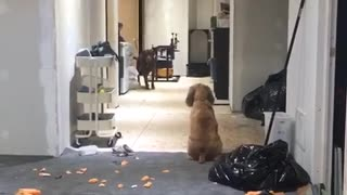 Dogs staring at each other for a long time - Video