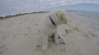 Beach Puppy  - Video