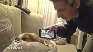 Dog's snore can be Awesome ringtone ^^! - Video