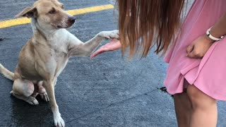 Sweet Street Dog Does High Fives After Being Fed