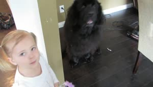 Girl shocked to learn dog doesn't want to be princess - Video