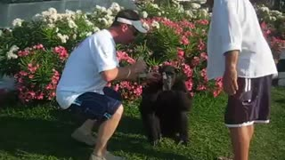 Corona drinking Monkey- Cancun Mexico  - Video