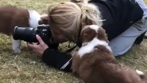 Rowdy puppies make woman's photography session difficult