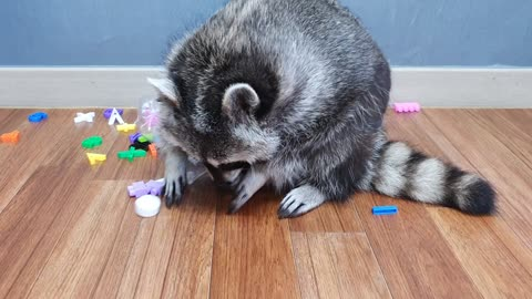 Raccoon pulls out the alphabet toy from the bottle of cola.