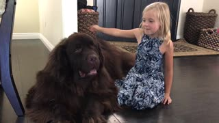 Little girl reunites with huge puppy after summer vacation - Video