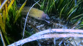 Face to Face with an Impressive Moray Eel