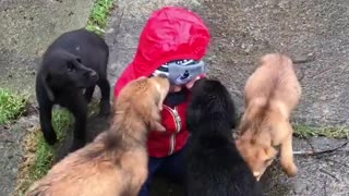 Here's a clip of a bunch of puppies kissing a baby