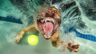 Creative Photographs Of Dogs Playing Underwater Fetch - Video