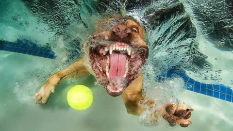 Creative Photographs Of Dogs Playing Underwater Fetch