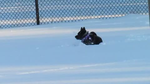 Dog having fun in the snow