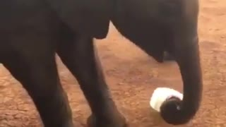 Elephant likes to play with bottles