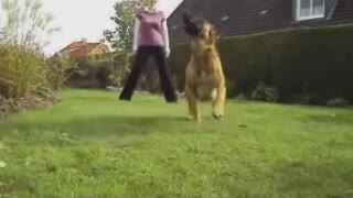 A dog who can do more then 100 tricks