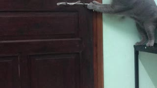 Kitty Defies Locked Door