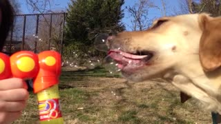 17 dogs who go bananas for bubbles - Video