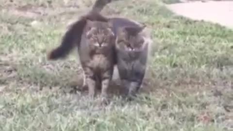 2 cats married and moving together outside home